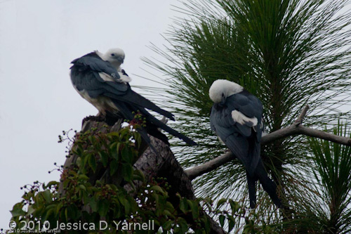 Cloudy, Breezy Days are Great for Bird-Watching at Gatorland's Bird Rookery