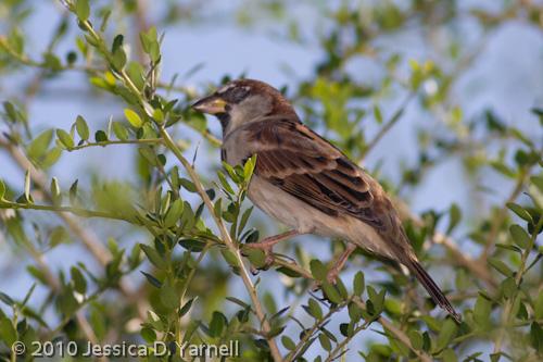 Papitos Backyard Birds